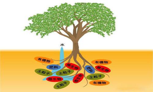作用_微生物在土壤中的作用