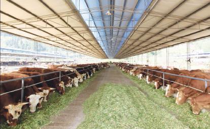 金宝贝发酵剂发酵牛饲料
