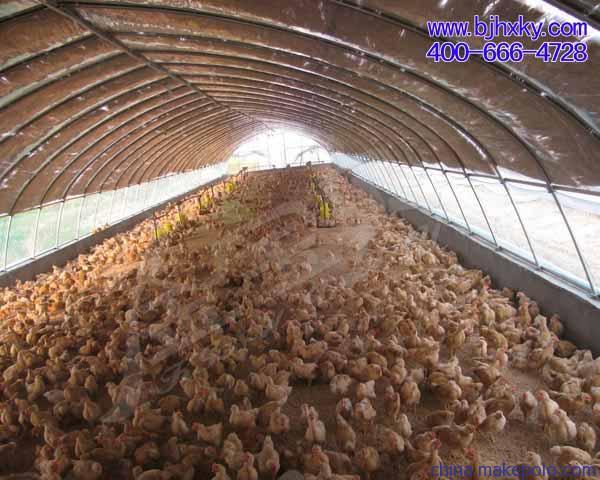 金宝贝发酵床养鸡的五大功