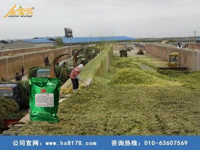 青贮饲料发酵