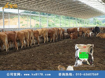养牛发酵床