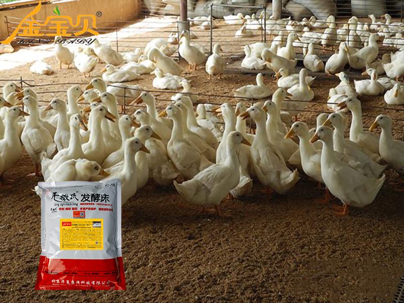 发酵床养鸭