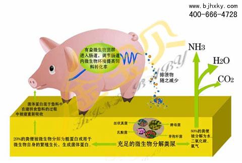 金宝贝发酵床原理图